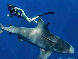"""""""Danças...com tubarões"""" - Uma experiência inesquecível, Photo Szilard Janko"""
