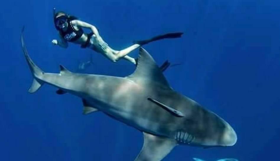 """""""Danças…com tubarões"""" – Uma experiência inesquecível"""